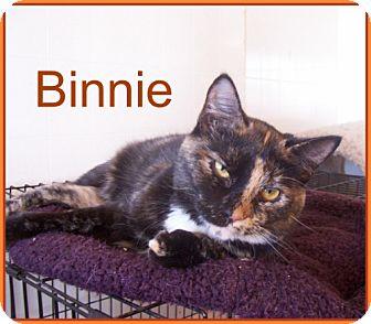 Domestic Shorthair Cat for adoption in Lacon, Illinois - Binnie