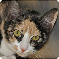 Adopt A Pet :: Sally - Atlanta, GA