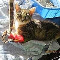 Adopt A Pet :: Babie - Bunnell, FL