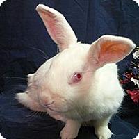 Adopt A Pet :: Carlotta - Newport, DE