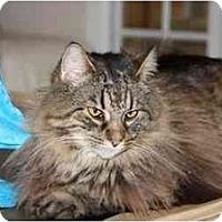 Adopt A Pet :: Buster Douglas - Bonita Springs, FL
