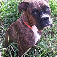 Adopt A Pet :: Maybel - Leming, TX
