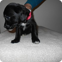 Adopt A Pet :: Wilkes Puppy #2 -Adopted! - Kannapolis, NC