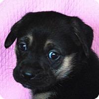 Adopt A Pet :: **SISSY** MEET FEB 13TH! - Mukwonago, WI