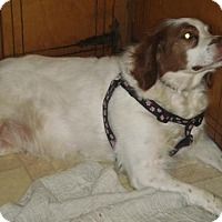 Adopt A Pet :: TN/Bailey - Hampton Cove, AL
