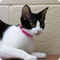Adopt A Pet :: Supra - Chula Vista, CA