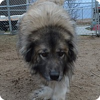 Adopt A Pet :: Buddha - Peyton, CO