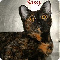 Adopt A Pet :: Sassy - El Cajon, CA