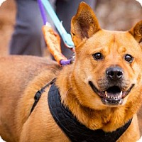 Adopt A Pet :: Clyde Bailey - Rockaway, NJ