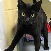 Adopt A Pet :: Skylar - Jackson, NJ