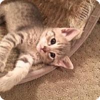 Adopt A Pet :: Suzie - Parlier, CA