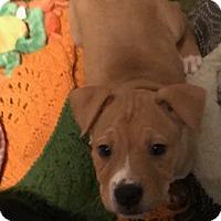 Adopt A Pet :: Buster - BONITA, CA