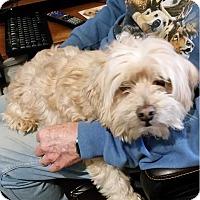 Adopt A Pet :: Chad - Concord, CA