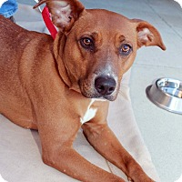 Adopt A Pet :: Shasta ~Sponsored~Reduced Fee~ - Youngsville, NC