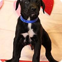 Adopt A Pet :: Barron - Waldorf, MD