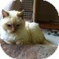 Adopt A Pet :: Mitsue (AKA Pearl) - Vancouver, BC