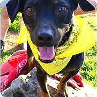 Adopt A Pet :: Spartacus easy dog - Sacramento, CA