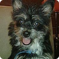 Adopt A Pet :: Tinky - Toluca Lake, CA