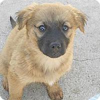 Adopt A Pet :: BECCA - Torrance, CA