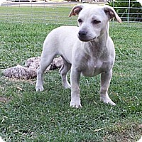 Dachshund/Terrier (Unknown Type, Medium) Mix Dog for adoption in Fresno, California - The Amazing Daisy Princess
