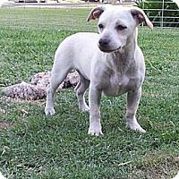 Adopt A Pet :: The Amazing Daisy Princess - Fresno, CA