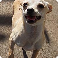 Adopt A Pet :: Teacup Baby Bruce