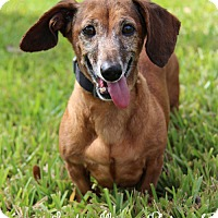 Adopt A Pet :: Bonnet - Weston, FL