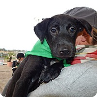 Adopt A Pet :: Maggie - San Diego, CA