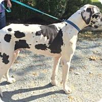 Adopt A Pet :: Bennett - York, PA