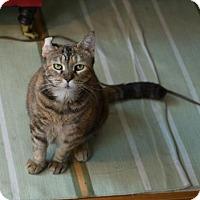 Adopt A Pet :: Nellie - New York, NY