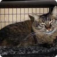 Adopt A Pet :: Kalimba - Mission Viejo, CA