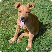 Adopt A Pet :: Parsley - Yardley, PA