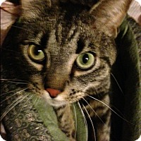Adopt A Pet :: Quinn - Madisonville, LA