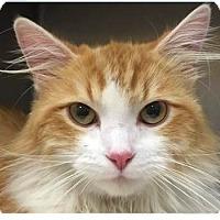 Adopt A Pet :: Milo - Springdale, AR