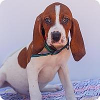 Adopt A Pet :: Pluto - Auburn, CA