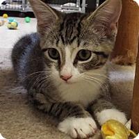 Adopt A Pet :: Reggie - Grants Pass, OR
