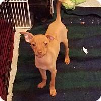 Adopt A Pet :: HEWIE - Gustine, CA