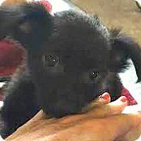 Adopt A Pet :: Mike-ADOPTION PENDING - Boulder, CO