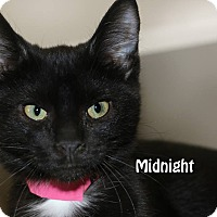 Adopt A Pet :: Midnight - Idaho Falls, ID