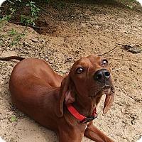 Adopt A Pet :: Alexa - West Warwick, RI