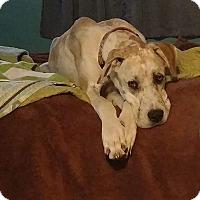 Adopt A Pet :: Jupiter - Reno, NV