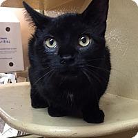 Adopt A Pet :: Bomani - Morganton, NC