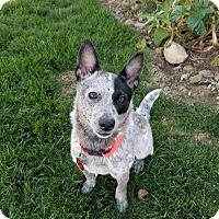 Adopt A Pet :: Lily Grace - PENDING! - Creston, OH