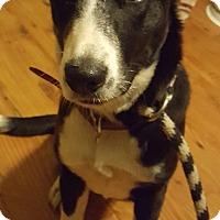 Adopt A Pet :: Katnis - Cleveland, OH