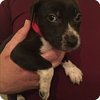 Adopt A Pet :: Nora - Colonial Heights, VA