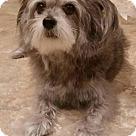 Adopt A Pet :: Hannah