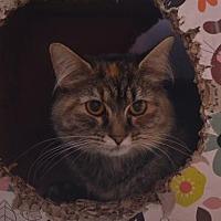 Adopt A Pet :: Rain - Brownsboro, AL
