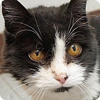 Adopt A Pet :: Skye - Sprakers, NY
