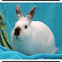 Adopt A Pet :: Judy - Williston, FL