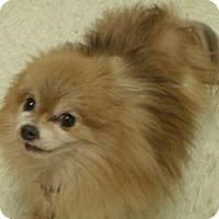 Adopt A Pet :: Whisper - Muskegon, MI